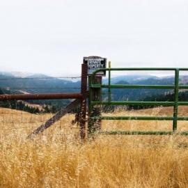 H. Lee: Grassland