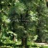 Book Week: Naruki Oshima: haptic green