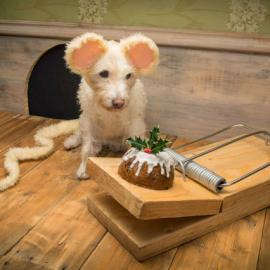 Peter Thorpe: Christmas Dogs