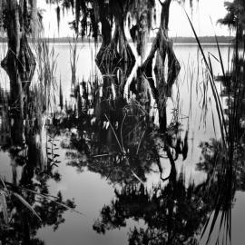 Photolucida: Benjamin Dimmitt : Primitive Florida