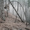 Daniel Kovalovszky: Green Silence