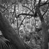 Benjamin Dimmitt: Paradise Lost