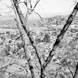 Virginia Wilcox: Arboreal