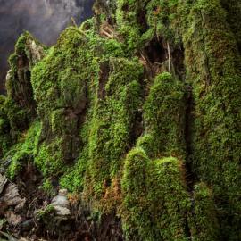 PhotoNOLA: Richard Alan Cohen: Moonlit and Waterline