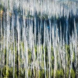 Crystal McBrayer: The States Project: Idaho