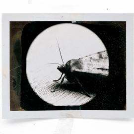 Art + Science: INSECTA: Mike & Doug Starn