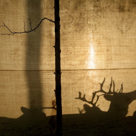 Erika Larsen: Sámi, The People Who Walk With Reindeer
