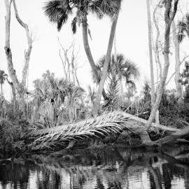 Benjamin Dimmitt: An Unflinching Look: Chassahowitzka Saltwater Intrusion