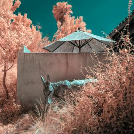 Covid Projects: Karen Constine: (un)real landscapes: Los Angeles plays itself