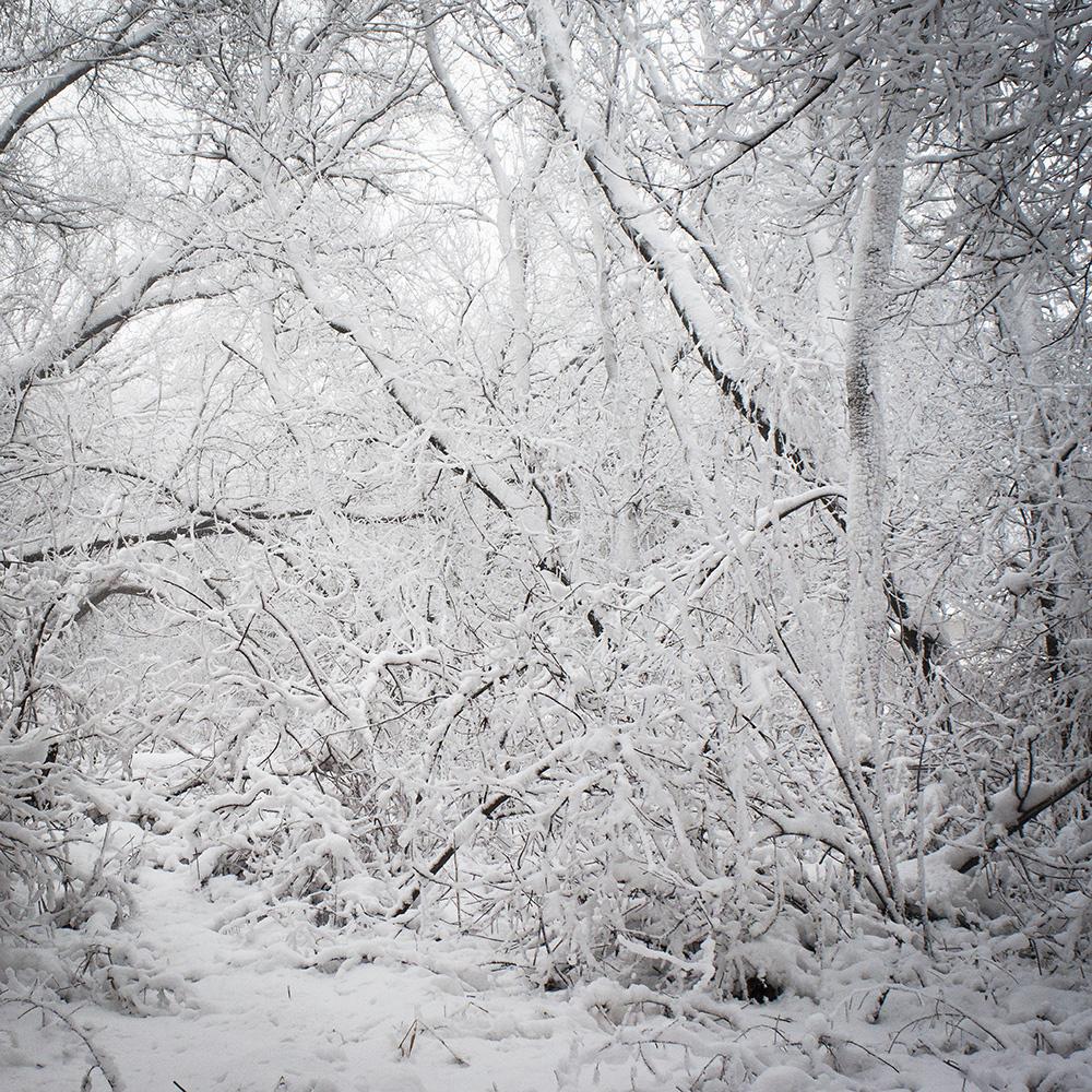 Stankey_snow3