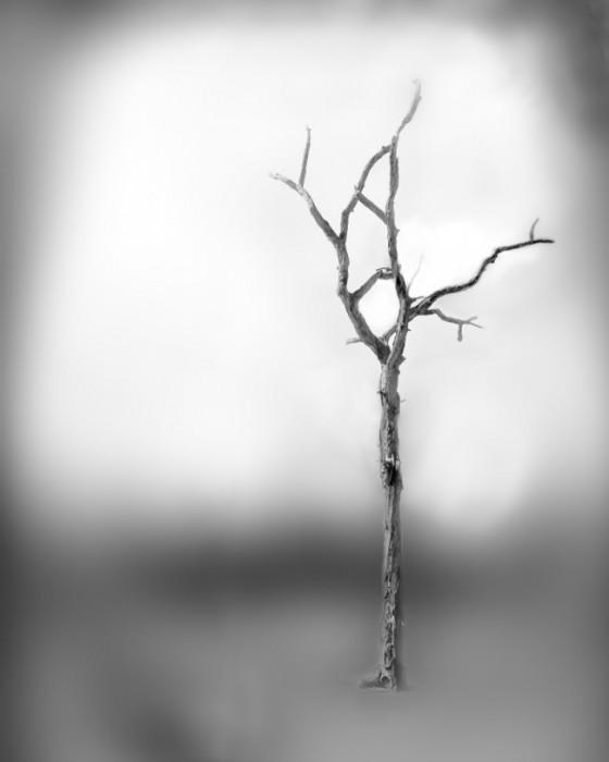 IM_Roots-651x813