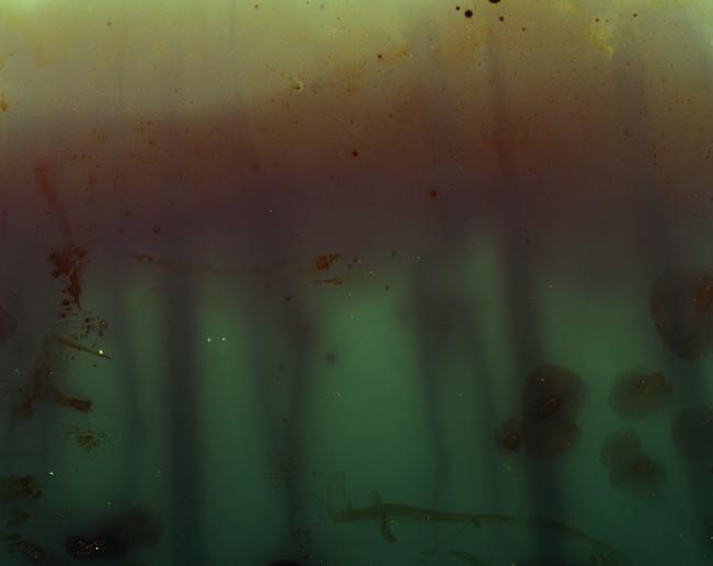 ocean_crest