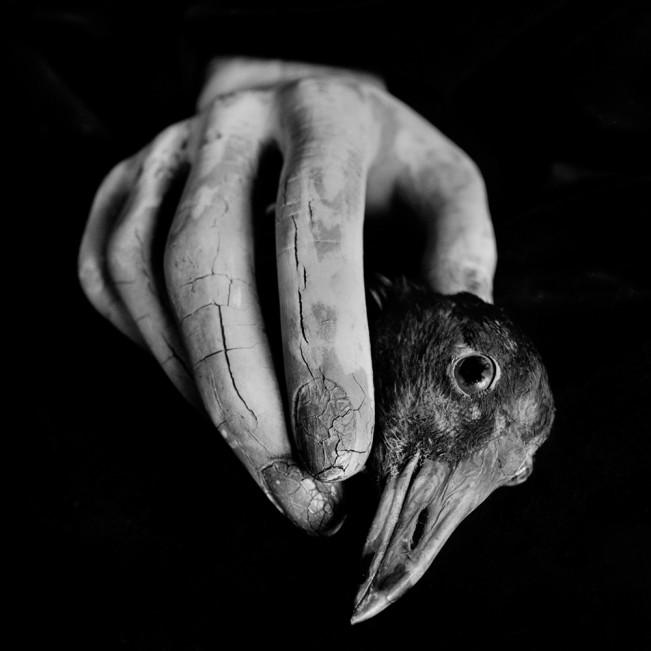 bird hand 001