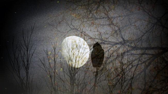 Midnight Owl_Lenscratch_Resized
