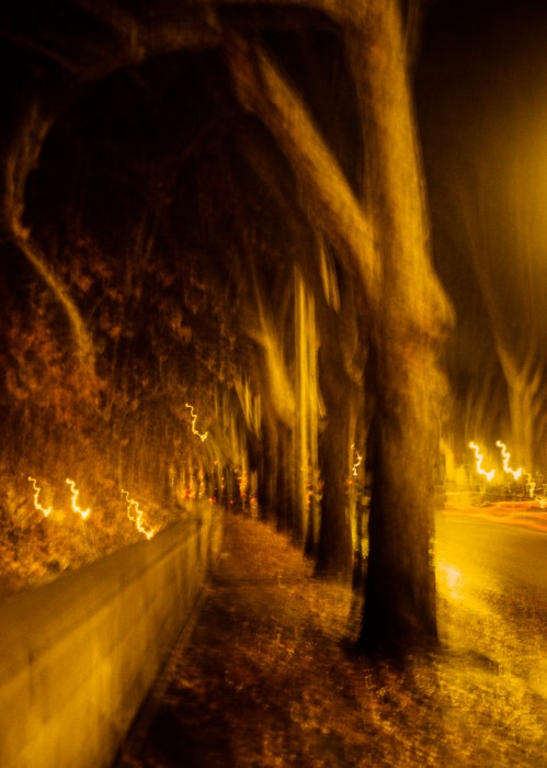 blurry_trees