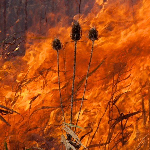 Burn No. 26