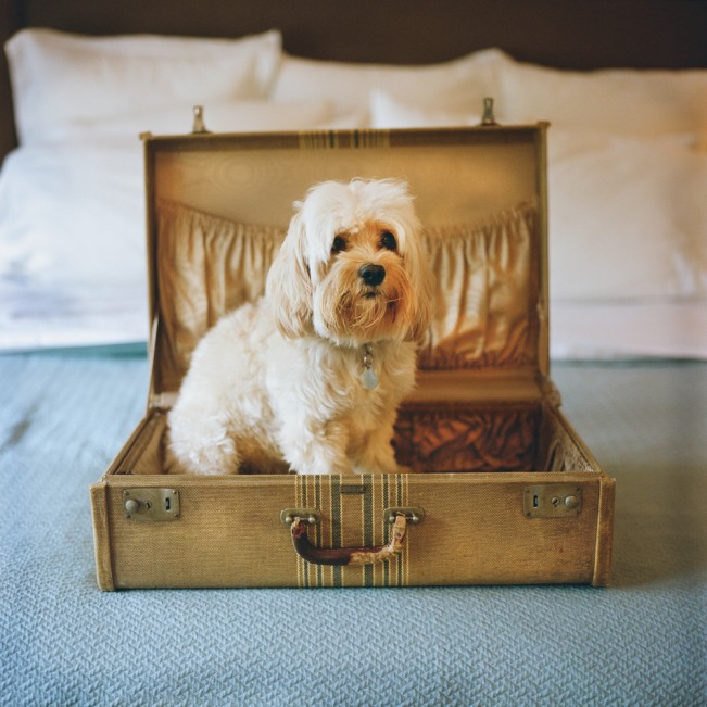Carly in a suitcase
