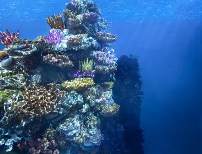 CoralFinalPrint