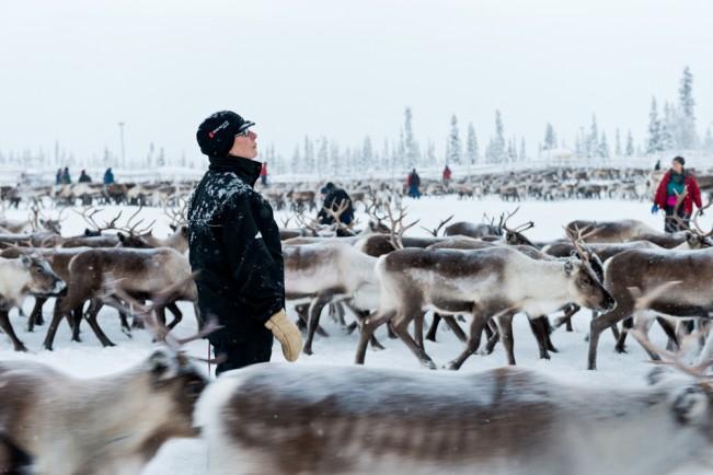 Sámi-Reindeer-Herders-Elisa-Ferrari-2