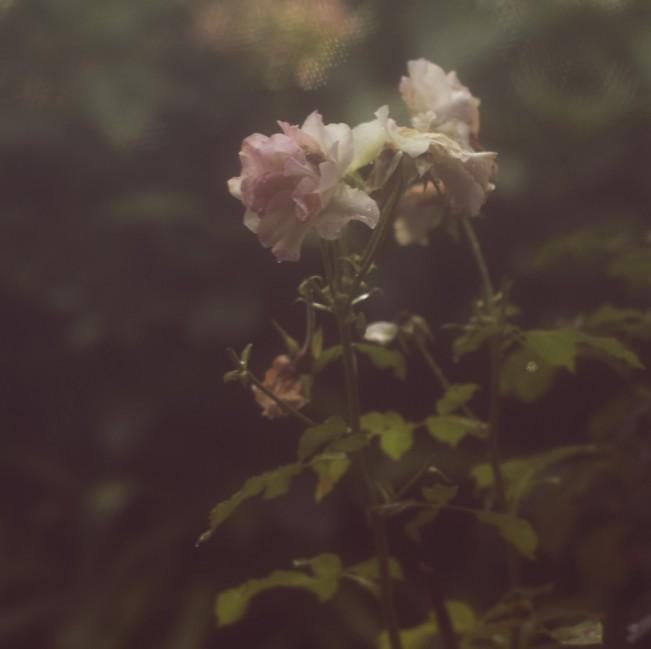 mystic rose_patrizia fusi