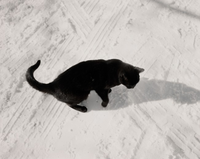 07 Disoriented Cat in Snow