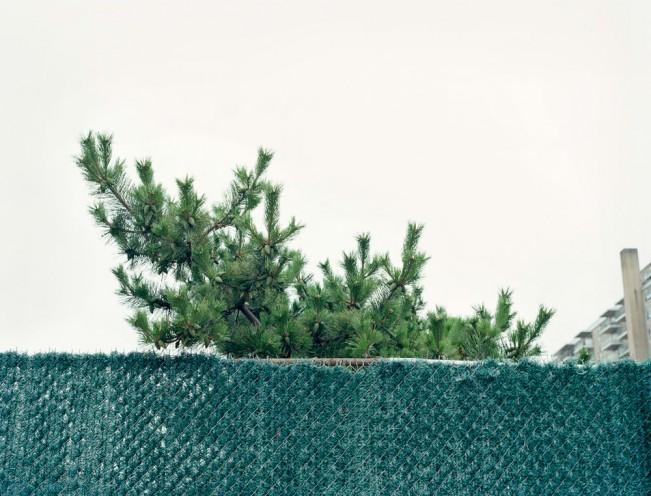 Dana-Stirling-_-fence