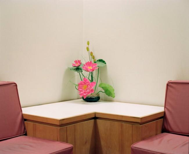 Dana-Stirling-_-flower