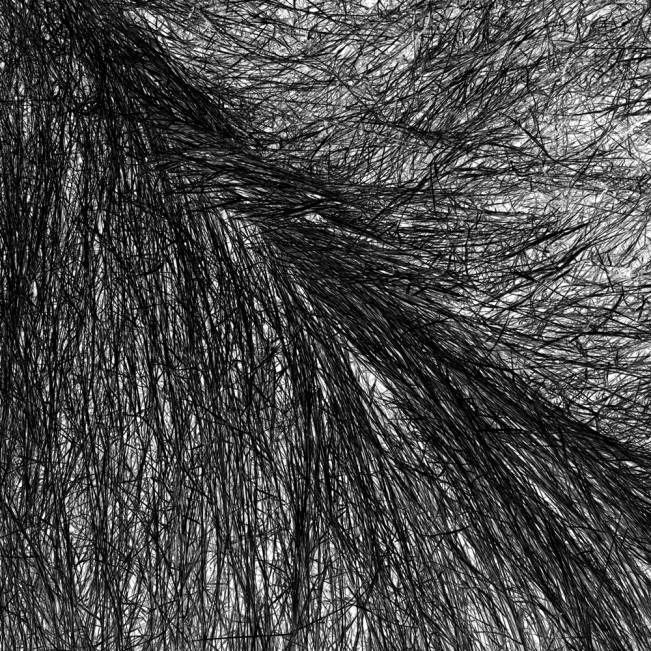 Elizabeth Stone Grass Tracks 14