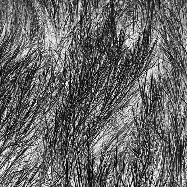 Elizabeth Stone Grass Tracks 23