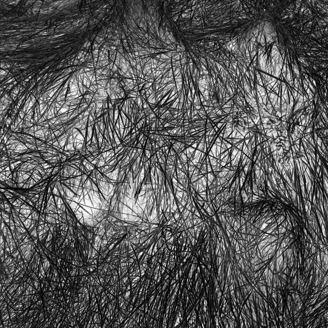Elizabeth Stone Grass Tracks 3