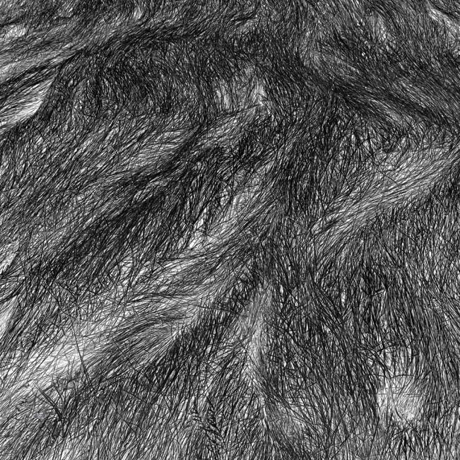 Elizabeth Stone Grass Tracks 6