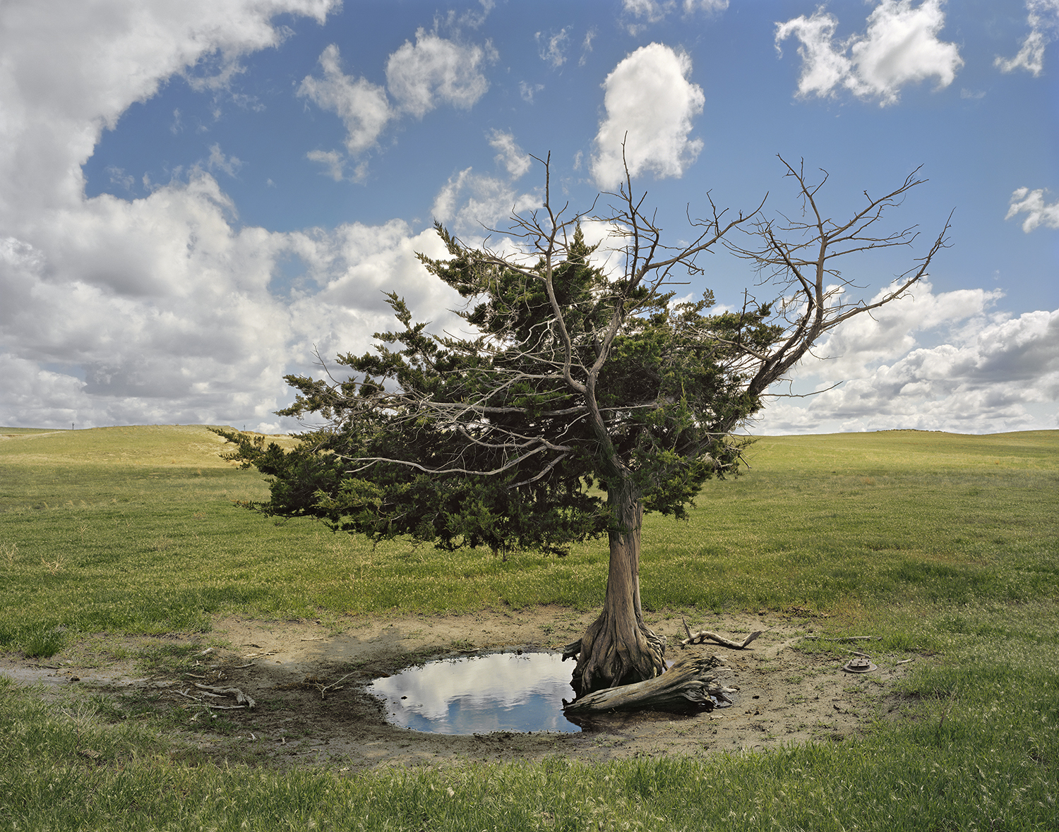 """Homesteader's Tree"", Cherry County, Nebraska, 2011"