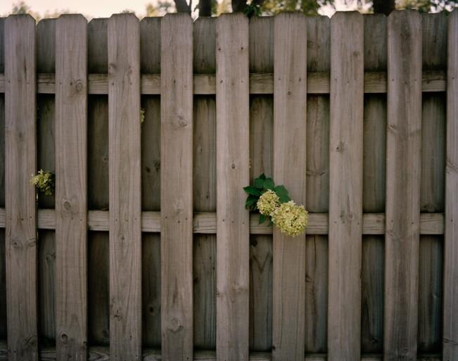 Peeking Hydrangeas