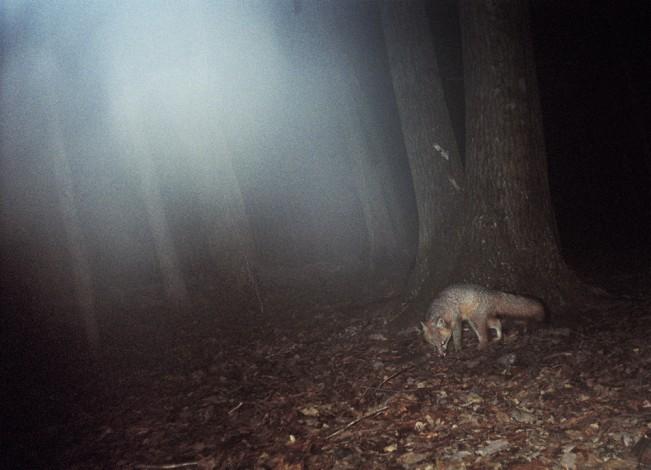 megan_cump_fox