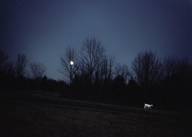 megan_cump_white_deer