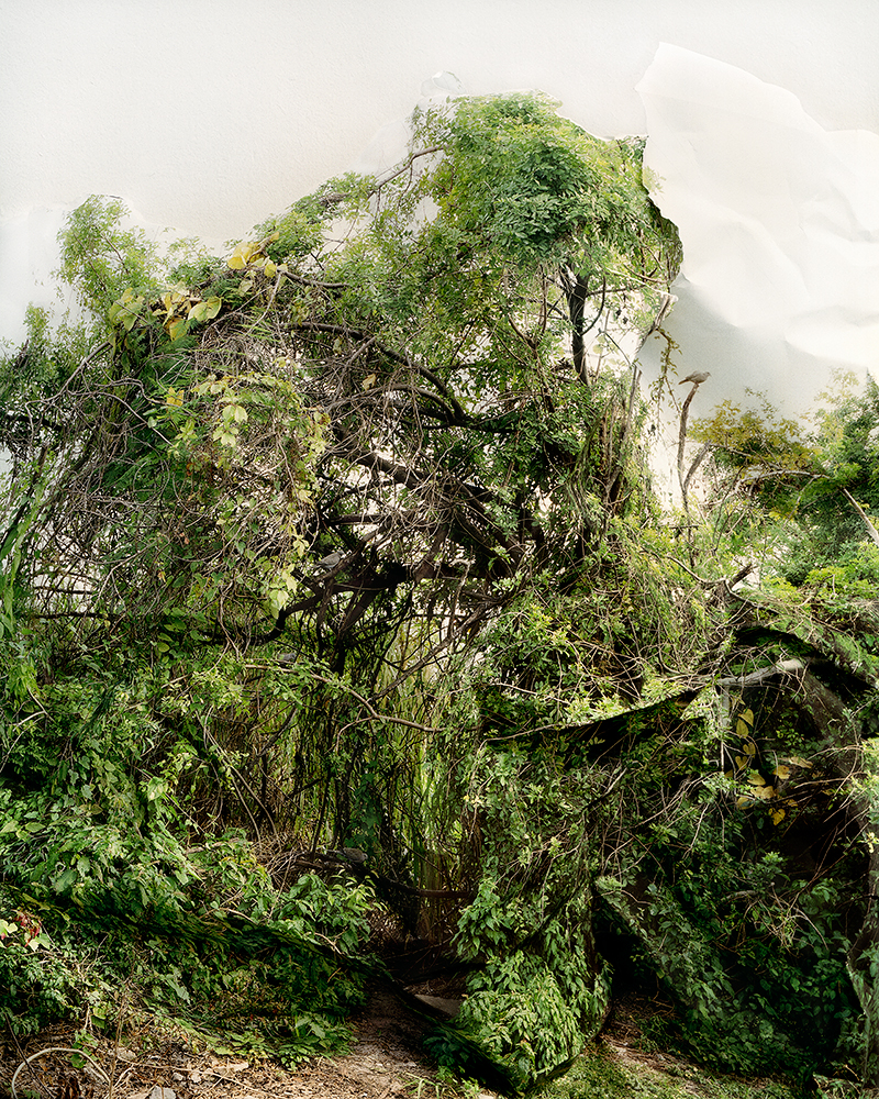 Image from the series Response © Laura Plageman