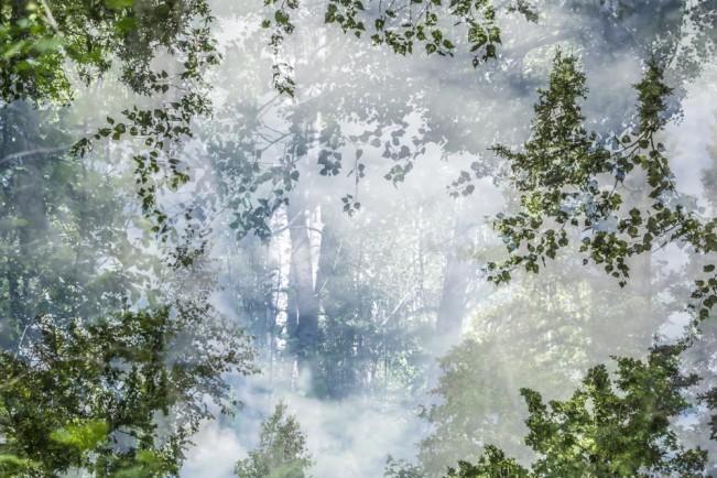Alaska Trees #4