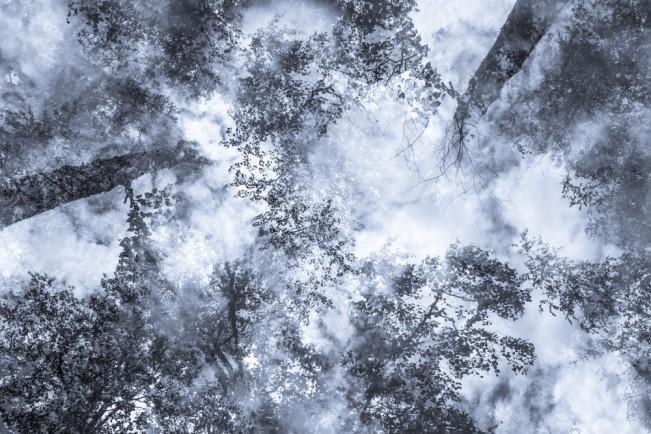 Alaska Trees #6