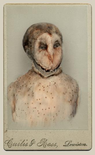 aviary_barn_owl_lg