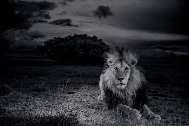 lions_MM7947_0813_001