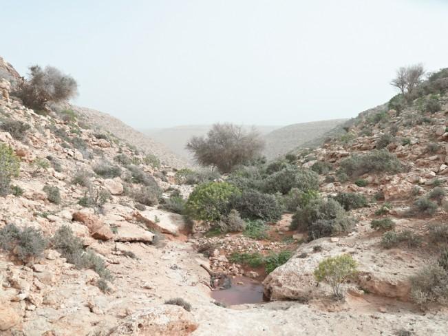 Arnold_Matthew_014_Watering hole, Wadi Zitoune