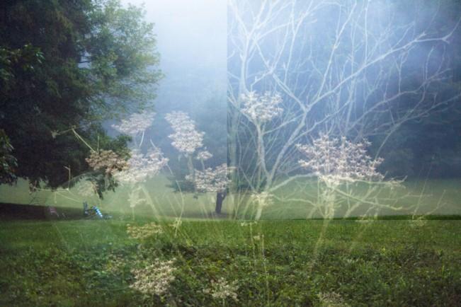 Danielle Kelly-Frauke Langguth- night tree daydream