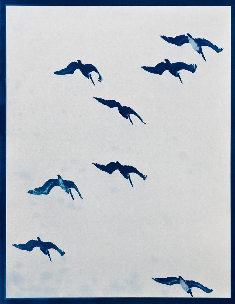Salomon, Alyssa - Birds Hang Motionless