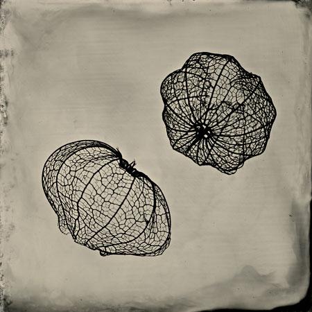 j_S. Gayle Stevens orbit