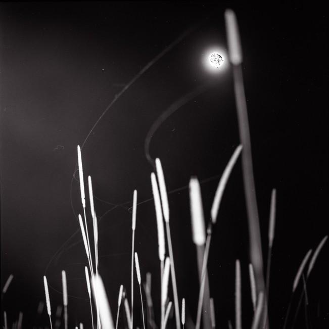 06_Rye Grass