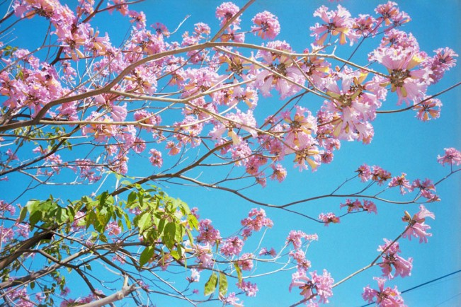14 Cherry Blossom by Ramiro Puentes