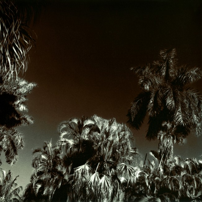 Glowing Palms, Fort Lauderdale, FL, 2009