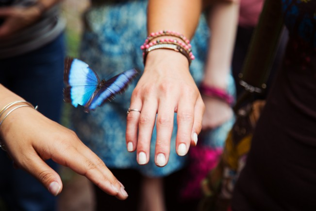 I_HAmistadi_AWKI_Butterfly