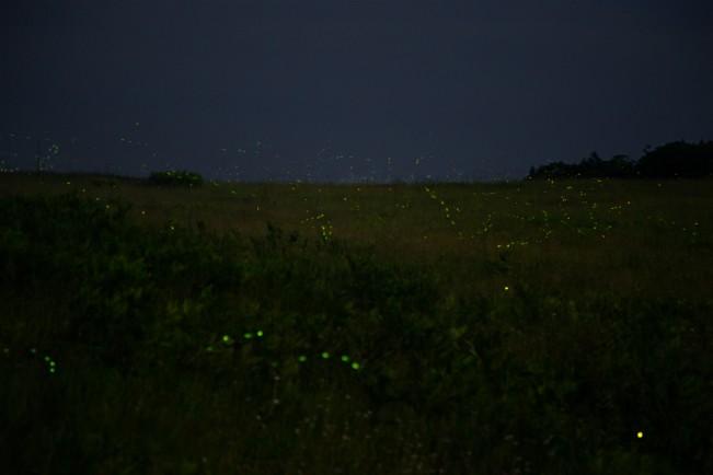 O_HAmistadi_AWKI_Fireflies
