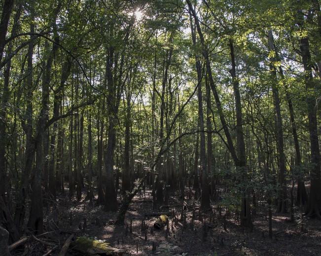 Ogeechee_Landscape_web